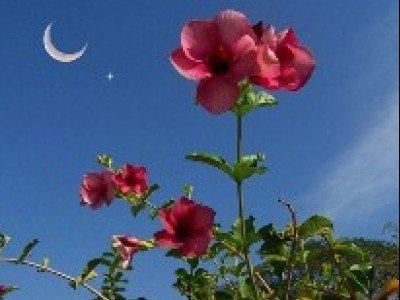 Ночные цветы обладают удивительными качествами