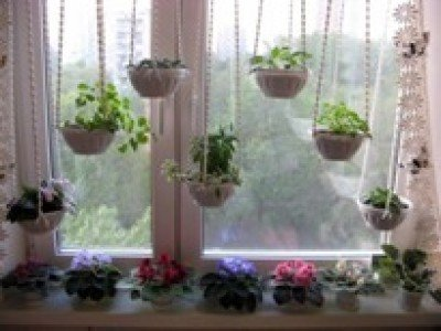 С комнатными цветами дышится легче