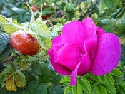 Урожайность овощей и фруктов можно увеличить за счет корректирования периода цветения