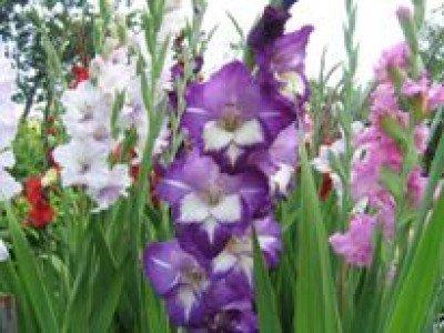 На смену экзотическим цветам приходят давно забытые