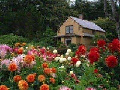 Подробные инструкции и советы по выращиванию цветов помогут начинающим цветоводам