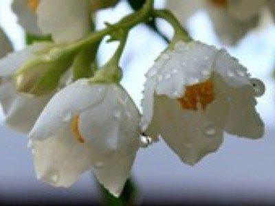 Разные цветы прячутся от дождя по-разному