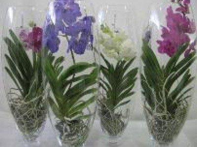 Срезанные орхидеи могут простоять полгода