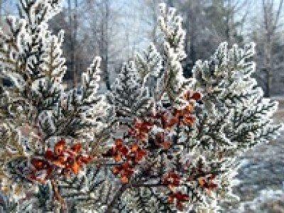 Зимние цветы можно сравнить с новогодним чудом