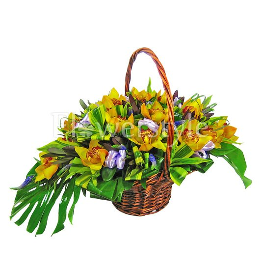 Подарочная корзина из орхидей «Династия» дополнительные изображения